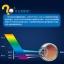 (พรีออเดอร์) ฟิล์มนิรภัย Huawei/Honor6 Plus-CJY thumbnail 3