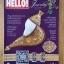 HELLO! : JEWELRY ฉบับที่ 6 / 2011 thumbnail 1