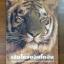 เสือโคร่งอินโดจีนในประเทศไทยและแนวทางการอนุรักษ์ / ดร.โรเบิร์ต มาเธอร์ thumbnail 1