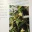 กล้วยไม้ สิงโตกลอกตาในประเทศไทย. ผู้เขียน สลิล สิทธิสัจธรรม thumbnail 30