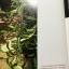 กล้วยไม้ สิงโตกลอกตาในประเทศไทย. ผู้เขียน สลิล สิทธิสัจธรรม thumbnail 27