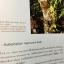 กล้วยไม้ สิงโตกลอกตาในประเทศไทย. ผู้เขียน สลิล สิทธิสัจธรรม thumbnail 29
