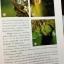 กล้วยไม้ สิงโตกลอกตาในประเทศไทย. ผู้เขียน สลิล สิทธิสัจธรรม thumbnail 22