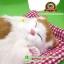 ตุ๊กตาแมวนอนหลับ สีขาวเหลือง [เบาะแดง] 19x24 CM thumbnail 1