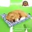 ตุ๊กตาหมานอนหลับ สีน้ำตาล [เบาะฟ้า] 13x17 CM thumbnail 1