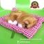 ตุ๊กตาหมานอนหลับ สีน้ำตาล [เบาะแดง] 19x24 cm thumbnail 1