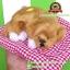 ตุ๊กตาหมานอนหลับ สีน้ำตาล [เบาะแดง] 19x24 cm thumbnail 2