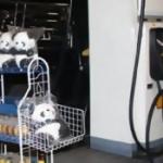 โจรบุกปล้นตุ๊กตาหมีแพนด้าในปั๊มน้ำมัน