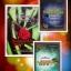 ส่งฟรี ซีรีย์ ชุด อ้อมกอดมัจจุราช 3 เล่มจบ / อัญญาณี หนังสือใหม่ทำมือ ลด 40 % thumbnail 1