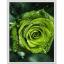 """2279 ภาพ diamond """"ดอกกุหลาบสีเขียวเข้ม"""" thumbnail 1"""