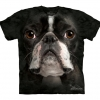 Boston Terrier Face - Youth