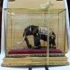 ช้างมงคลพร้อมตู้กระจก01