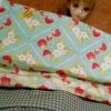 May59.Pack8 :ผ้าจัดเซตผ้าคอตตอนอเมริกา2 ชิ้น (ขนาดแต่ละชิ้น27 x 45 cm )+คอตตอนซื้อในไทย 1 ชิ้น (ขนาด 50 x 55 cm) รวมเป็น3 ชิ้น