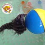 Beavers Ball บีเวอร์เล่นลูกบอล ใช้ถ่านAA 2ก้อน