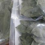 ใบทุเรียนเทศ,ใบทุเรียนนํ้า (Dried Soursop Leaves)