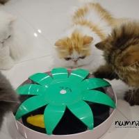 ของเล่นแมว ไม้ล่อแมว ที่ลับเล็บแมว คอนโดแมว อุโมงค์แมว