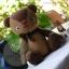 ตุ๊กตาหมีผ้าขนสีน้ำตาลขนาด 22 cm. - BandBand thumbnail 1