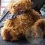 ตุ๊กตาหมีผ้าขนหยิกขนาด 25 cm. - Bagel thumbnail 2
