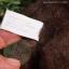 หมีสีน้ำตาลเข้ม ขนาด 13 ซม. thumbnail 5