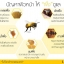 la mala bee venom ครีมพิษผึ้ง thumbnail 20