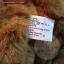 หมีนั่งสีน้ำตาล ขนาด 21 ซม. thumbnail 3