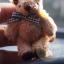 ตุ๊กตาหมีผ้าขนสีน้ำตาลขนาด 6.5 cm. - BeanBear thumbnail 2