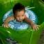 Size M สุดฮิต สีฟ้า- ห่วงยางพยุงหลัง Safty Baby Swim Trainer Float ล็อค 2 ชั้นโอบรอบตัว ปลอดภัย (6 เดือน -2 ขวบ ( -วิธีใช้ดูในคลิปวีดีโอค่ะ) (สายพาดบ่าไม่จำเป็นต้องเป่านะคะ ตัวปีกสีขาวโตแล้วไม่ต้องเป่า) thumbnail 14