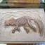 ชุดขุดฟอสซิลไดโนเสาร์(แบบแผ่นฟอสซิลตั้งโชว์) thumbnail 4