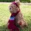 หมีขนหยิกสีโกโก้ ขนาด 28 ซม. thumbnail 2