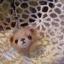 ที่ห้อยโทรศัพท์มือถือหัวหมีทำจากใยขนแกะ งาน neddle felt thumbnail 6