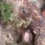 หมีสีน้ำตาลเข้ม ขนาด 13 ซม. thumbnail 2