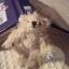 ตุ๊กตาหมีผ้าขนสีครีมขนาด 5 cm. - BB bear thumbnail 5