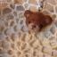 ที่ห้อยโทรศัพท์มือถือหัวหมีทำจากใยขนแกะ งาน neddle felt thumbnail 4