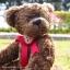 หมีเท็ดดี้สีน้ำตาลเข้ม สูง 31 ซม. thumbnail 4