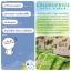Colly Chlorophyll Fiber Plus คลอลี่ คลอโรฟิลล์ ไฟเบอร์ พลัส (15ซอง/กล่อง) จำนวน 1กล่อง thumbnail 10