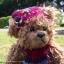 หมีขนหยิกสีโกโก้ ขนาด 28 ซม. thumbnail 3