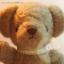 ตุ๊กตาหมีผ้าขนสีน้ำตาลเทาขนาด 23 cm. - Bloom thumbnail 1