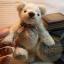ตุ๊กตาหมีผ้าขนสีครีม ขนาด 14 cm. - Herbie thumbnail 6