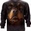 Rottweiler Face (LS) thumbnail 1