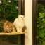 ที่นอนแมวติดกระจก thumbnail 4