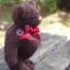 ตุ๊กตาหมีขนสีน้ำตาลเข้มขนาด 16 ซม. - DoBear thumbnail 2