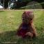 หมีขนหยิกสีโกโก้ ขนาด 28 ซม. thumbnail 5