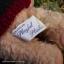 หมีสีครีมใส่เสว๊ตเตอร์ ขนาด 21 ซม. thumbnail 4