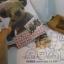 ชุด Kit ทำตุ๊กตาหมี 14 cm. - Herbie Bear thumbnail 1