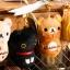 (สินค้าแลกซื้อในราคา 60 บาท) San-X ที่ห้อยมือถือแบบเช็ดหน้าจอได้ มี Rilakkuma/ Korilakkuma/ Chicken/ Kutsushita Nyanko thumbnail 5