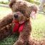 หมีเท็ดดี้สีน้ำตาลเข้ม สูง 31 ซม. thumbnail 1