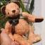 ตุ๊กตาหมีผ้าขนแกะสีน้ำตาลทองขนาด 20 cm. - Lilac thumbnail 3