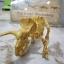 ชุดขุดฟอสซิลโมเดลไดโนเสาร์ 2ตัว(ประกอบได้) thumbnail 3