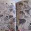 SPRIGGAN ผู้พิทักษ์โลก เล่มเดียวจบ นินางาวะ เรียวยิ และ ทาคาชิเงะ ฮิโรชิ เขียน thumbnail 3