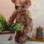 ตุ๊กตาหมีผ้าฝ้ายขนาด 14 cm. - Herbie thumbnail 3